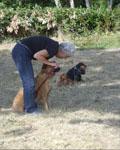 dressage chien persévérance