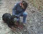 education canine contre les morsures