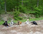 éducation canine comportement sociale