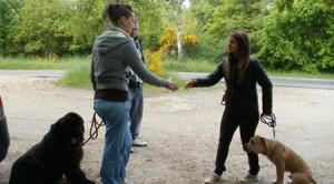 Cours d'éducation de chien en plein air
